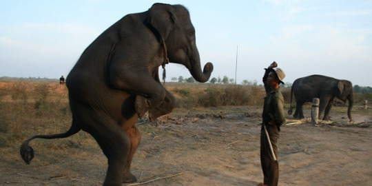 Taman Nasional Way Kambas, Tempat Wisata di Lampung Timur Yang Paling Meimikat Turis asing-gajah sumatera di way kambas