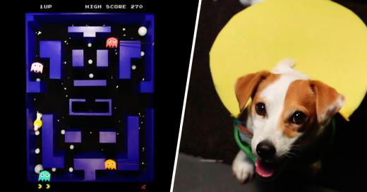 """El """"perro Pac-man"""" demuestra ser todo """"maestro"""" jugando"""
