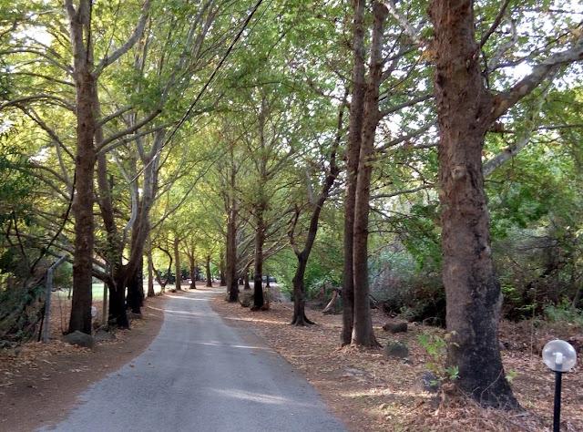 лиственная аллея