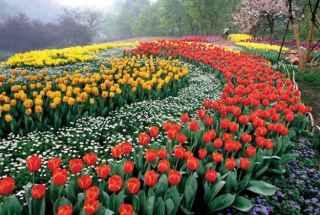 Villa murah dekat taman bunga begonia lembang bandung
