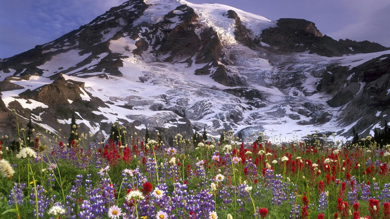 Wallpaper Proslut Full Size Ice Mountains Forest Hd