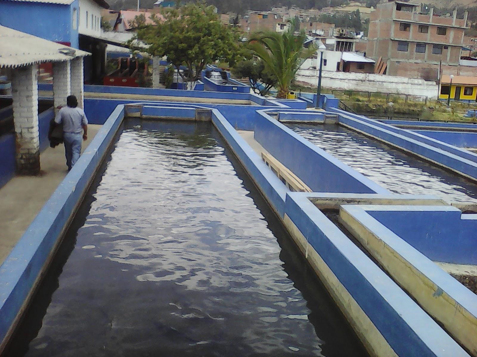 Despertar cajatambino propuesta para la construcci n de for Crianza de truchas en estanques