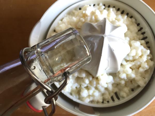 Rinçage des grains de kéfir de lait