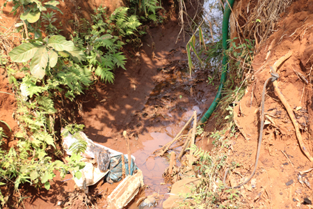 """Gia Lai: Vườn cà phê khô hạn, nông dân """"tố"""" công ty bò sữa chặn nước tưới"""