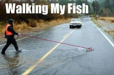 Walking my fish