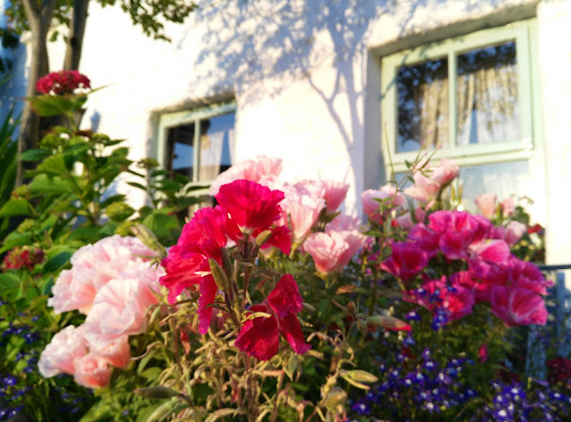 colourful flowers, sunrise, white gables