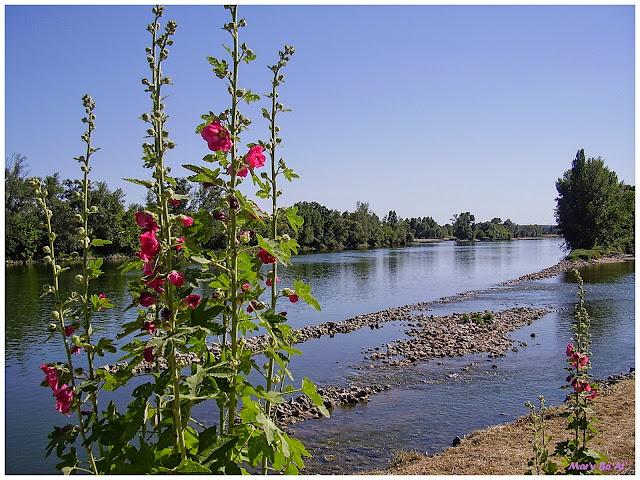 Loire et rose trémière en touraine