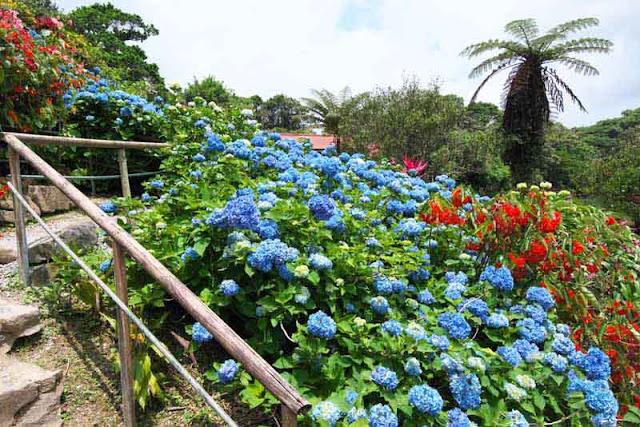 Handrails line paths through the gardens