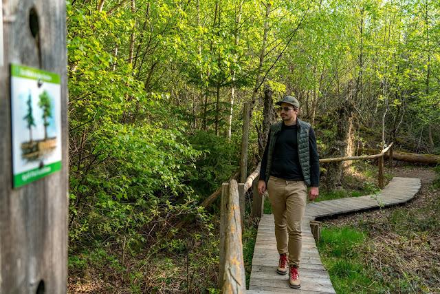 Premiumwanderweg - Traumschleife Burgstadt-Pfad – Kastellaun | Kyrill-Sturmwurferlebnispfad | Wandern-Hunsrück 13