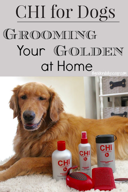 easy ways to groom your golden retriever dog at home #CHIforDogs