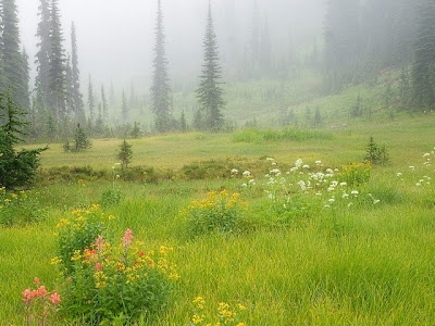 Beautiful Meadow