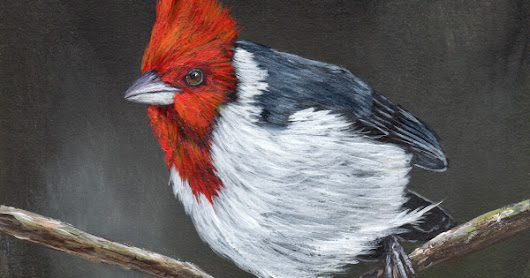 Red Crested Cardinal in acrylics