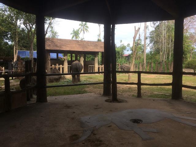 gajah zoo kemaman