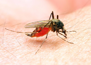 Algeria and Argentina are officially malaria-free, says WHO