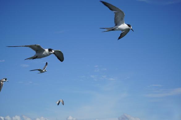 chụp cận cảnh chim hải âu