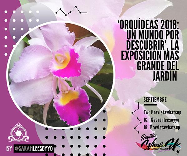 Orquídeas-2018- mundo-descubrir-exposición-Jardín-Botánico