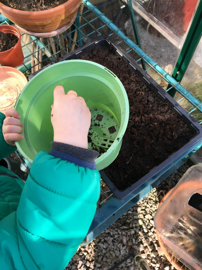How-to-Sow-Seeds-for-Absolute-Beginners-image-of-toddler-sprinkling-compost-over-seeds