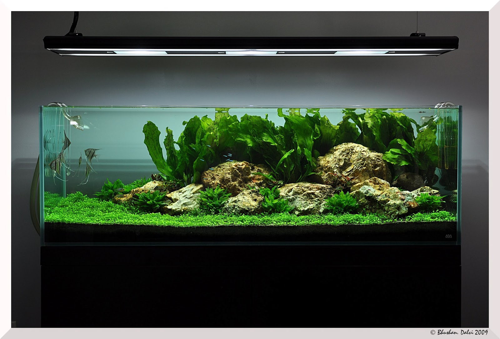 Pics Collection of Truly Inspired Aquascape ~ The Fancy Flora