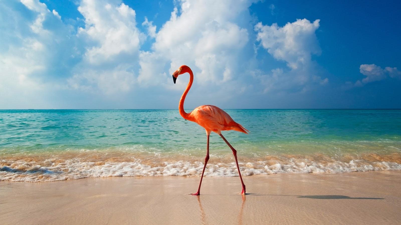 The Bahamas Bahamian Symbols