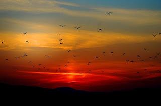 amanhecer com muitos passaros e ceu avermelhado