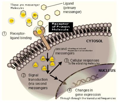 Bio Tuner at Molecular Level