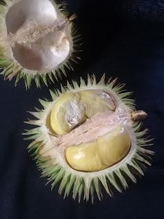 durian marawin