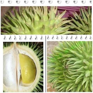 Mengenal buah lai si durian hutan kalimantan
