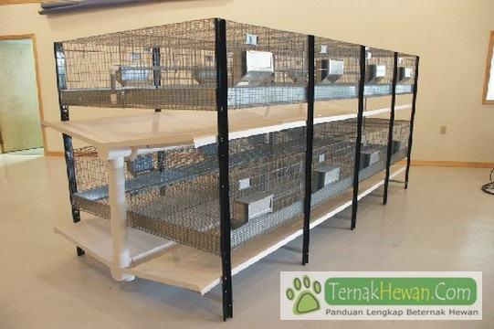 Rabbit Cage Modern - 5 Model Kandang Kelinci Rumahan dan Kriteria Kandang Yang Sehat