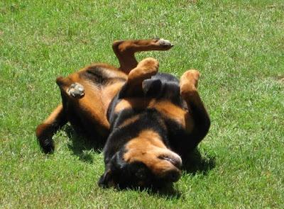 Pas za vreme epileptičnog napada