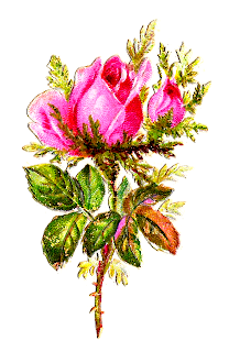 rose flower shabby chic pink digital clipart image botanical art