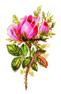 rose flower shabby chic pink digital clipart image botanical art