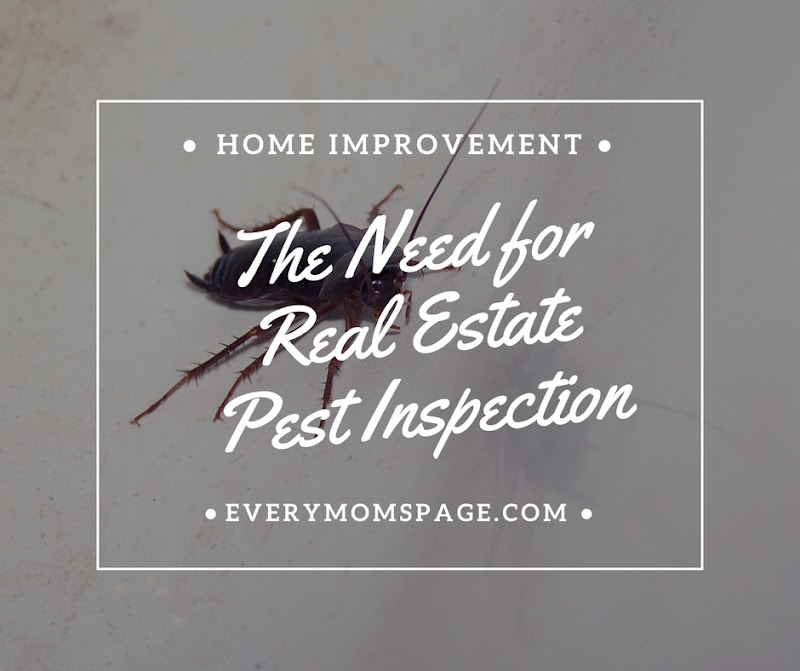 The Need for Real Estate Pest Inspection