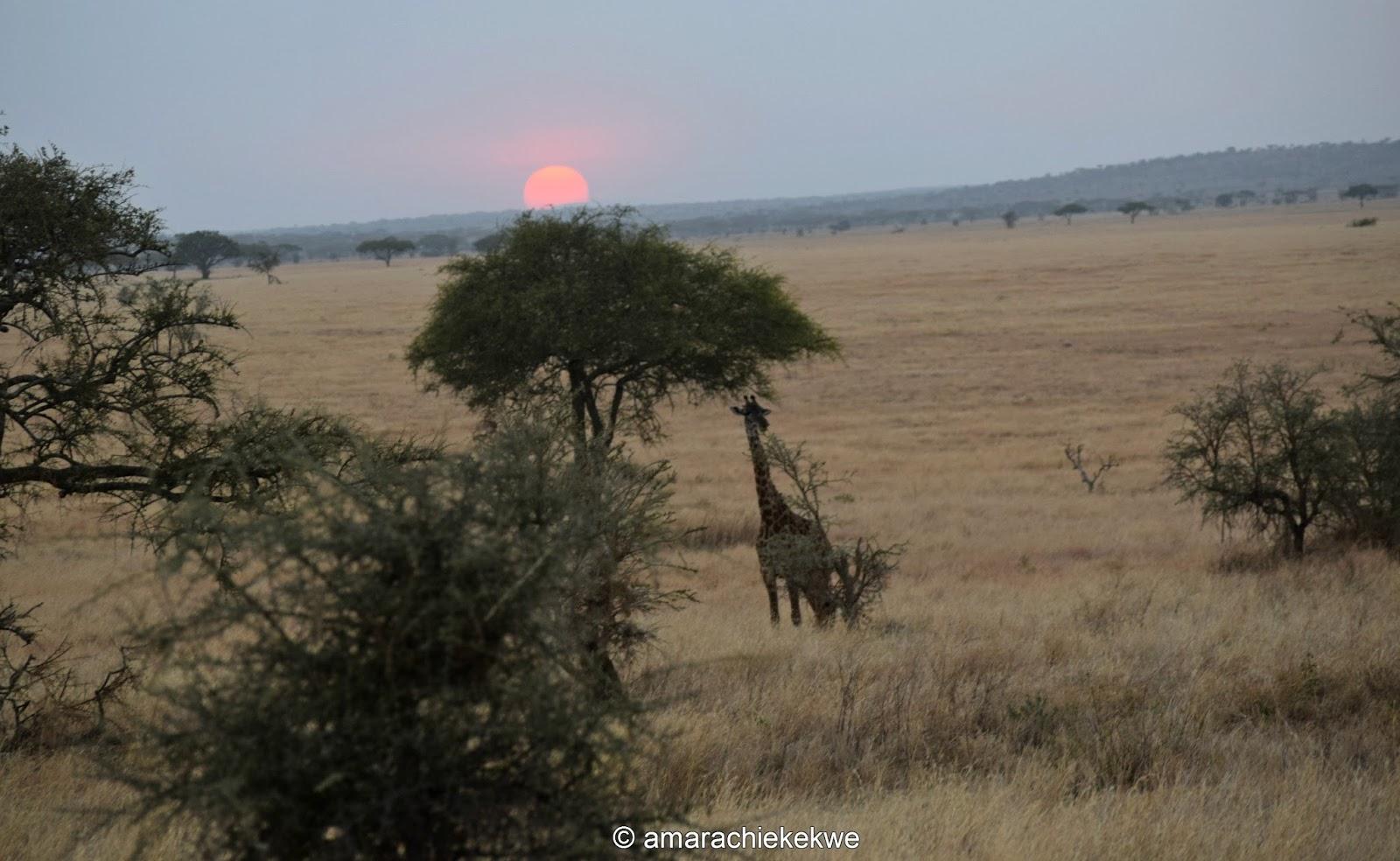 https://i2.wp.com/2.bp.blogspot.com/-kd8-eqZFC5Q/WGlWZ5OR2FI/AAAAAAAAXpY/LDjhqpxNsJsJCsyMK5717ytVLXIYoRVtACLcB/s1600/giraffe.jpg?resize=750%2C461&ssl=1