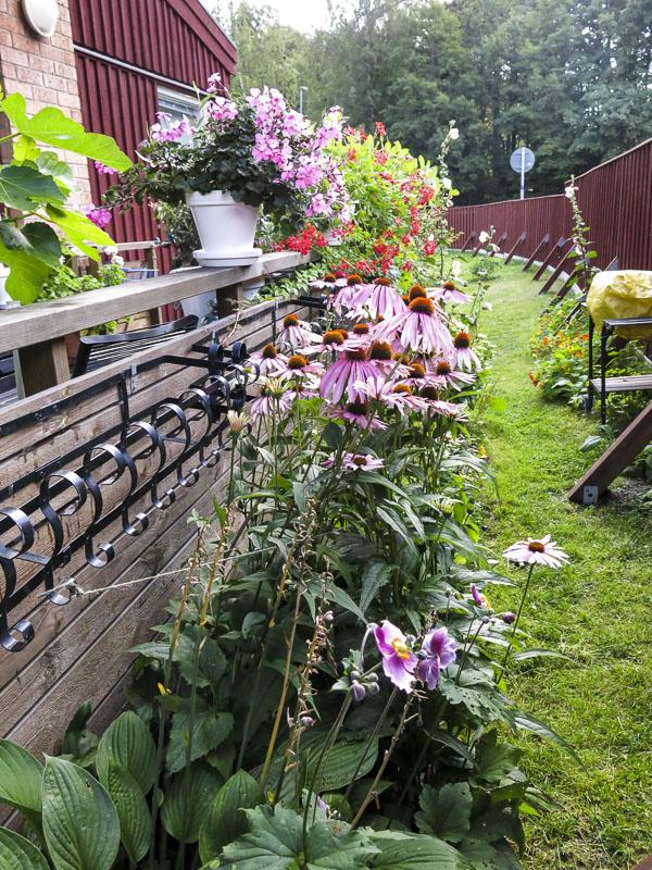 rabatt, flowerbed