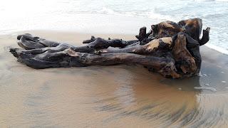 Piece of dead wood