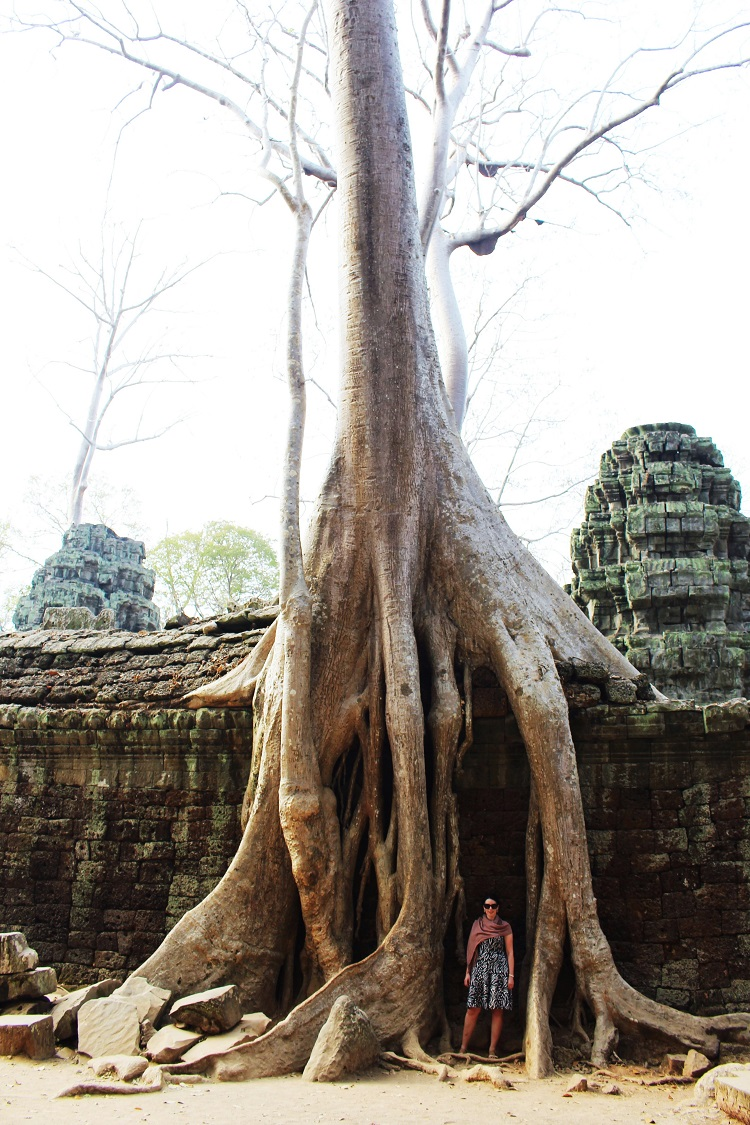 Giant tree roots around Angkor temples in Siem Reap, Cambodia - Asia travel blog