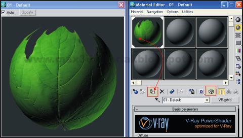 modeling 3d leaf