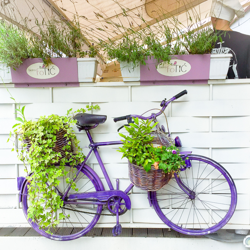 purple bicycle in front of fotic