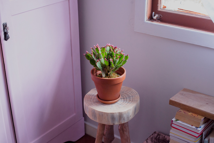 indoor cactus for room