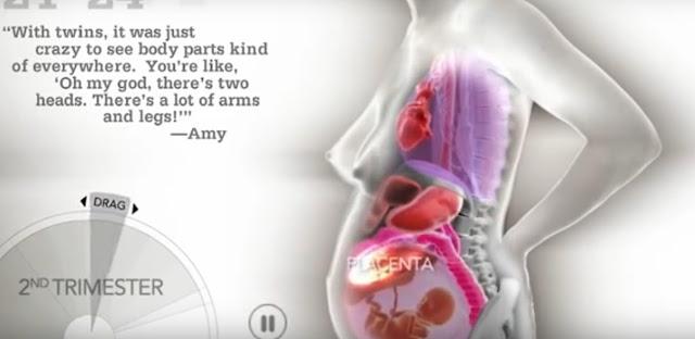 Изменения женского тела во время беременности показали на видео