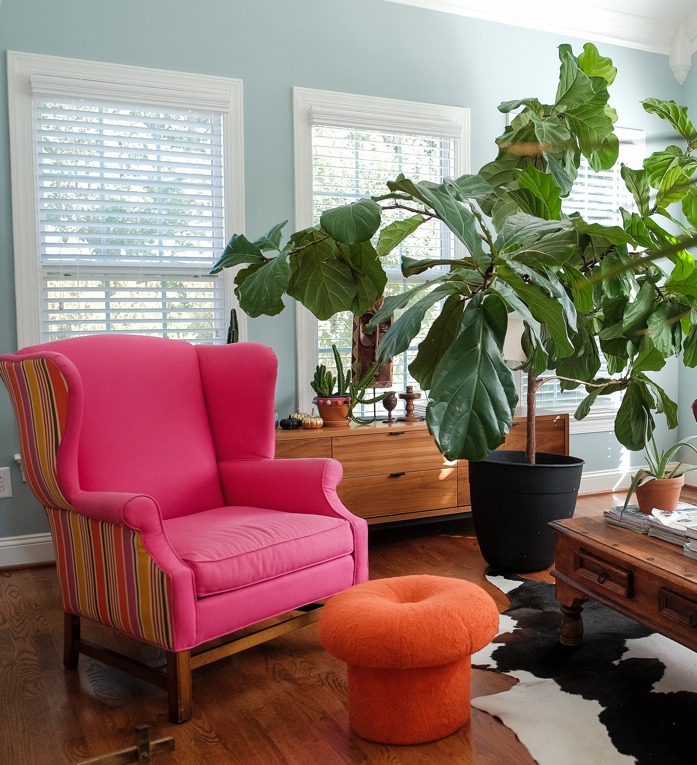How to Maintain Your Houseplants During the Fall and Winter Months- designaddictmom