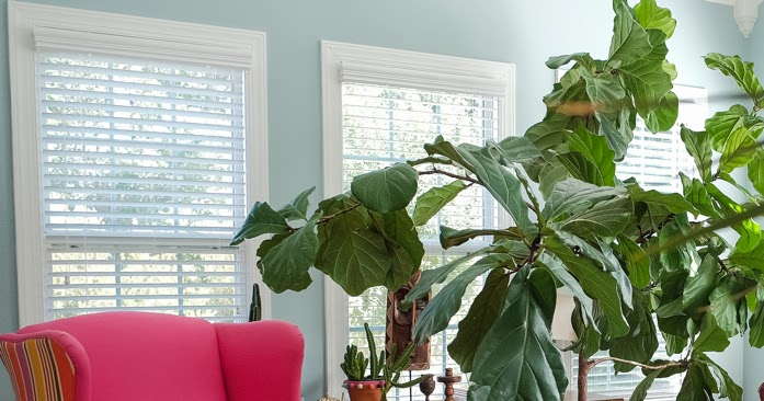 Design addict mom how to maintain your houseplants during for No maintenance indoor plants