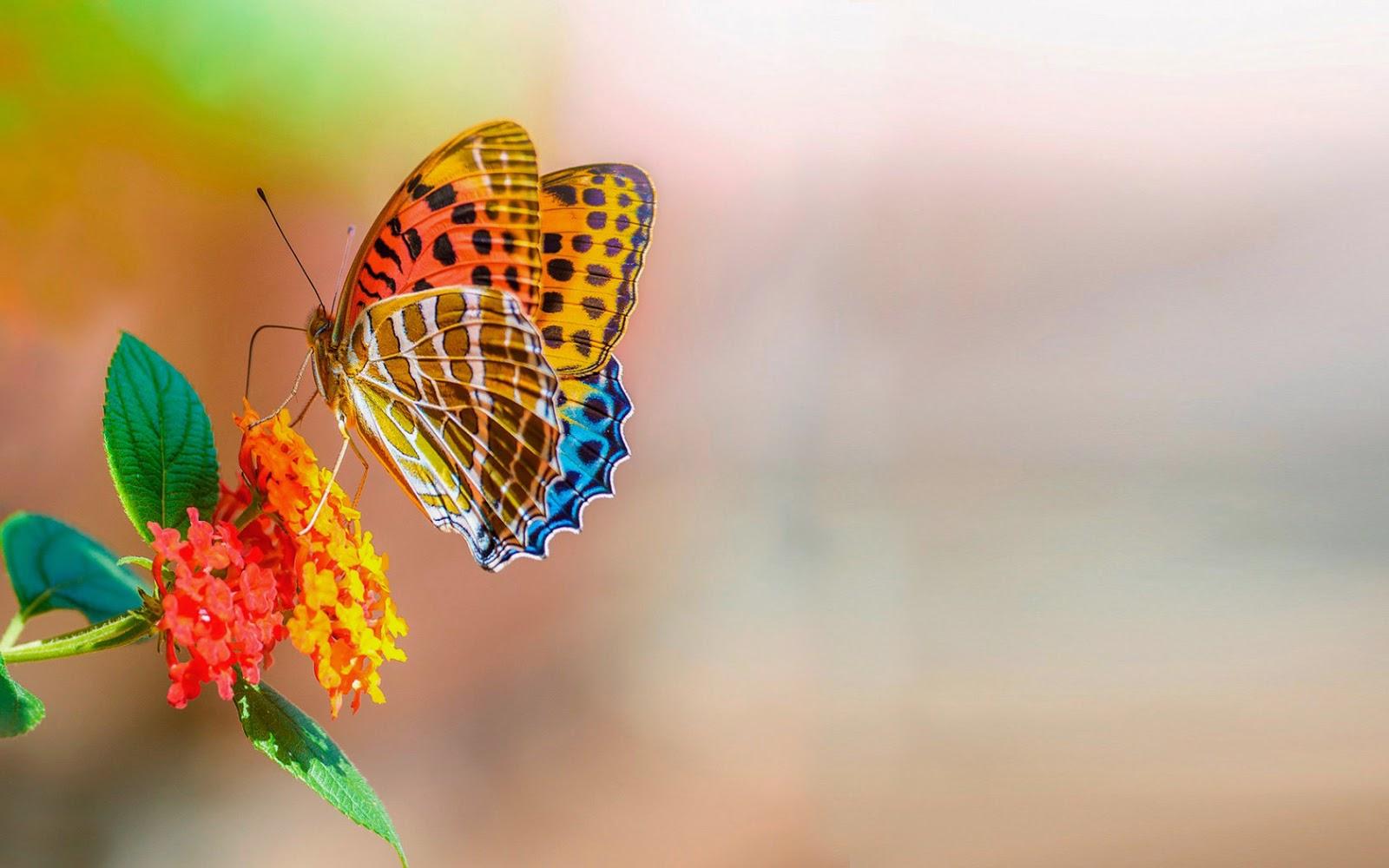 Mooie kleurrijke vlinder op mooie bloem
