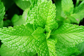 Mint leaves Turns Many Benefits To Health