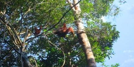 Taman Nasional Sebangau palangkaraya