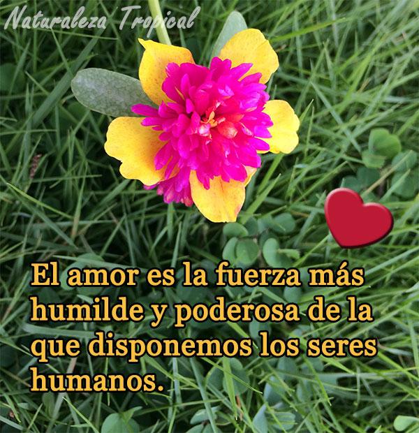 El amor es la fuerza más humilde y poderosa de la que disponemos los seres humanos.
