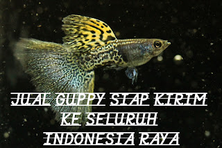kirim ikan lewat jne, kirim ikan hias, kirim ikan via pesawat, kirim ikan via jne, kirim ikan hias jne, kirim ikan keluar negeri, kirim ikan hidup, kirim ikan ke luar pulau, kirim ikan jne, kirim ikan tiki, kirim ikan, kirim ikan arwana, cara kirim ikan antar pulau, pengiriman ikan antar pulau, pengiriman ikan arwana, cara kirim ikan arwana, pengiriman benih ikan, pengiriman ikan beku, pengiriman bibit ikan, cara kirim bibit ikan, biaya kirim ikan, pengiriman ikan bandeng, pengiriman ikan cupang, cara kirim ikan, cara kirim ikan ke luar pulau, cara kirim ikan koi, cara kirim ikan hias keluar kota, cara kirim ikan ke luar negeri, cara kirim ikan ke luar kota, cara kirim ikan lewat pesawat, cara kirim ikan hidup, kirim ikan ke luar negeri, expedisi kirim ikan, kirim ikan herona, pengiriman ikan hidup, jasa kirim ikan hidup, jasa kirim ikan hias, cara kirim ikan hias, jasa kirim ikan, pengiriman ikan jarak jauh, cara kirim ikan jarak jauh, pengiriman ikan ke luar negeri, pengiriman ikan kerapu, ongkos kirim ikan koi, pengiriman ikan koi, pengiriman ikan lewat pesawat, pengiriman ikan lele, pengiriman ikan lewat jne, ongkos kirim ikan, pengiriman paket ikan, pengiriman ikan sidat, pengiriman ikan segar, pengiriman ikan tuna, kirim ikan via tiki, pengiriman ikan via pesawat, forsaken world kirim ikan yang hidup, aquarium canister filter, aquarium canopy, aquarium cleaner, c aquarium ipad, c aquarium lite, c aquarium seoul, c aquarium ipa, aquariumpros.c, aquarium c class, red c aquarium, n c aquarium, d.c. aquarium, aquarium decorations, aquarium driftwood, aquarium dimensions, aquarium design, aquarium depot, aquarium divider, aquarium dallas, aquarium david vann, aquarium design group, d aquarium levittown, d'aquarium eau froide, aquarium d eau de mer, aquarium d'eau douce, aquarium d'angle, aquarium d occasion, aquarium d amnéville, aquarium d amboise, aquarium d'arcachon, aquarium d'allex, aquarium equipment, aquarium expo, aquarium encounters, aquarium eels, aquarium ecosystem, aquarium expo 2015, aquarium epoxy, aquarium exhibits, aquarium engineering, aquarium events, e aquarium penang, aquarium ebooks, n e aquarium, n e aquarium coupons, ebay aquariums, e shine aquarium light, e coli aquarium, fluval e aquarium heater, e-jet aquarium, e florida aquarium, aquarium filter, aquarium fish for sale, aquarium frogs, aquarium fish store, aquarium filter types, aquarium fish names, aquarium furniture, aquarium freshwater fish, aquarium filter media, aquarium f r i penang, aquarium of the pacific, s f aquarium,