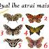 Escolha uma borboleta, veja o que ela revela sobre tua vida e se surpreenda com o resultado do teste