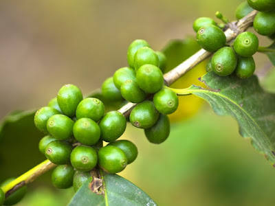7 Health Benefits Of Green Coffee Beans