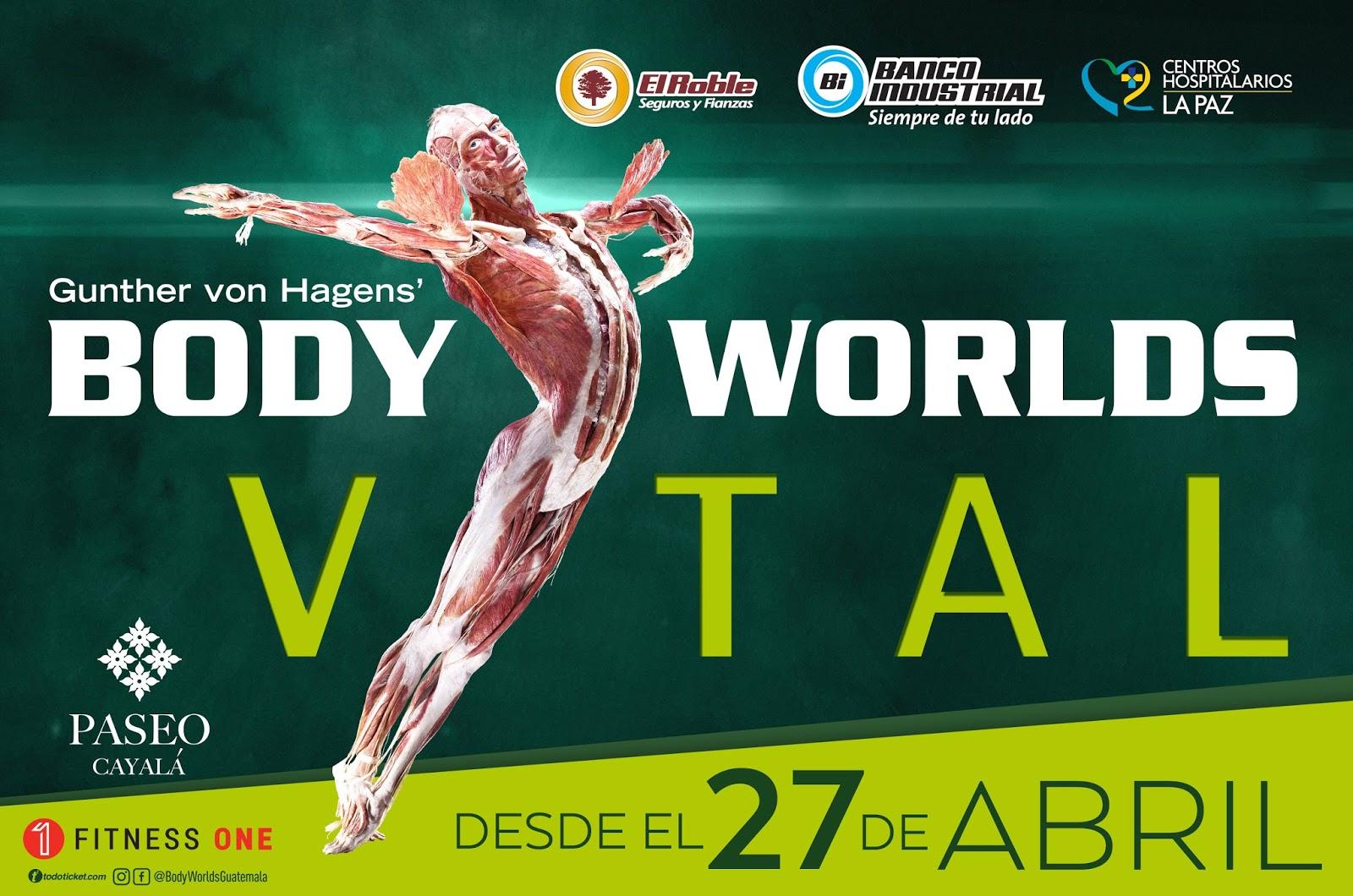 Body Worlds regresa a Guatemala en Abril - puntoguate.com